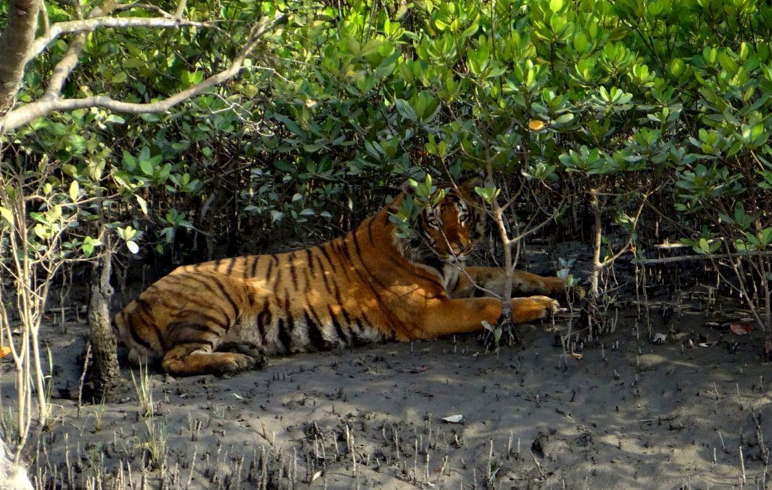 Must Visit Places in India - Sunderbans, West Bengal
